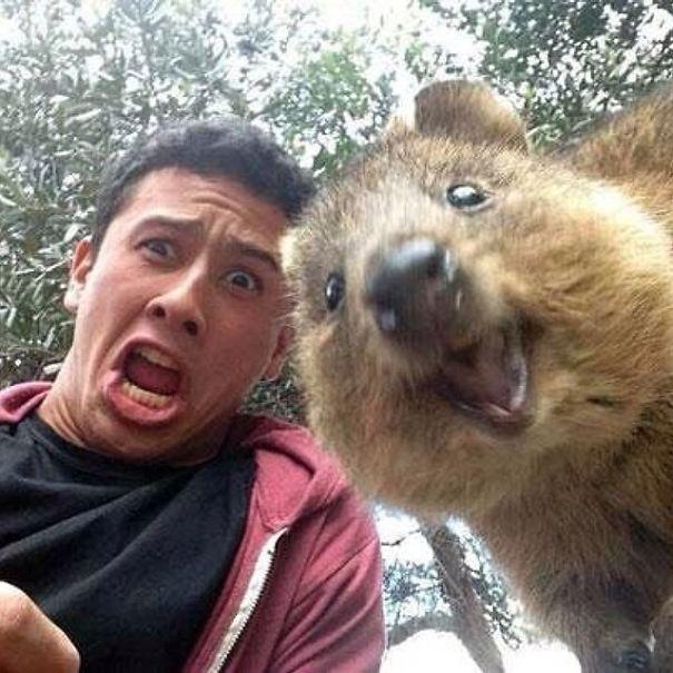 Quokka-Selfie-Der-Entzückende-Trend-in-Australien-2