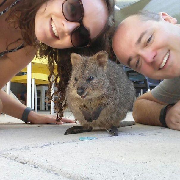 Quokka-Selfie-Der-Entzückende-Trend-in-Australien-15