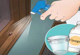 10 Dinge, die Sie tun müssen, um nie wieder eine Spinne in Ihrer Küche, Ihrem Badezimmer oder Ihrem Schlafzimmer zu sehen