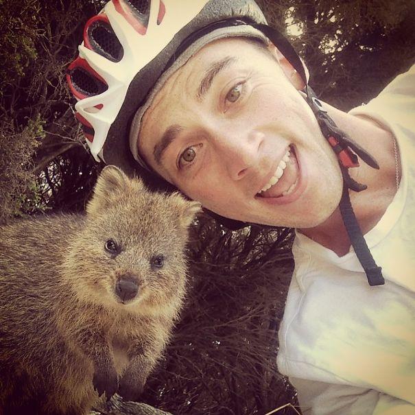 Quokka-Selfie-Der-Entzückende-Trend-in-Australien-14