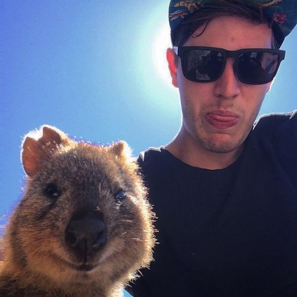 Quokka-Selfie-Der-Entzückende-Trend-in-Australien-8