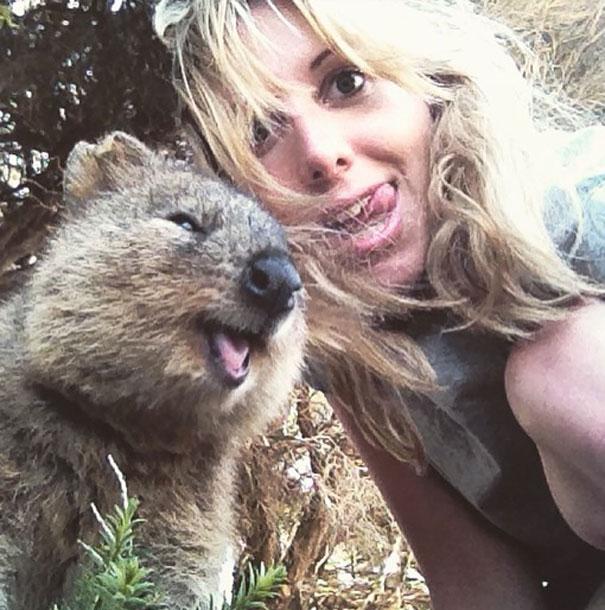 Quokka-Selfie-Der-Entzückende-Trend-in-Australien-5