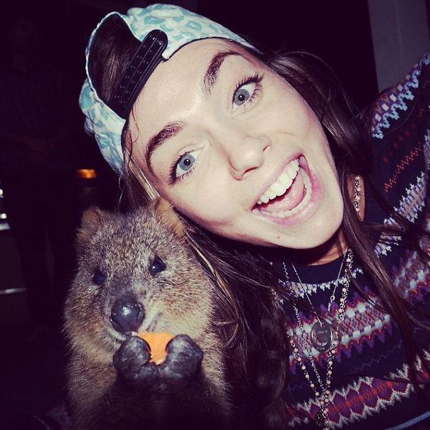 Quokka-Selfie-Der-Entzückende-Trend-in-Australien-16