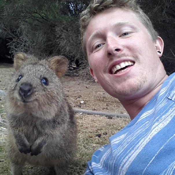 Quokka-Selfie-Der-Entzückende-Trend-in-Australien-4