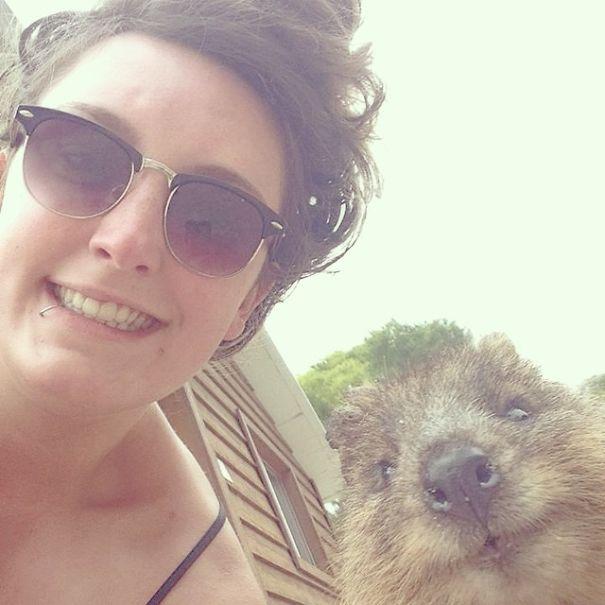 Quokka-Selfie-Der-Entzückende-Trend-in-Australien-21