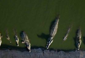 Israel begegnet dem Krokodil-Problem mit gestrandeten Reptilien