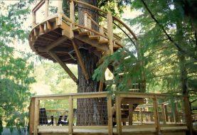 Microsoft hat ein riesiges Baumhaus für seine Mitarbeiter gebaut