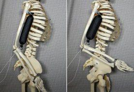 Künstliche Muskeln könnten Roboter 15 Mal stärker machen als Menschen
